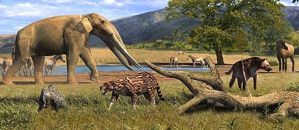 Yacimiento_paleontologico_Crevillente2